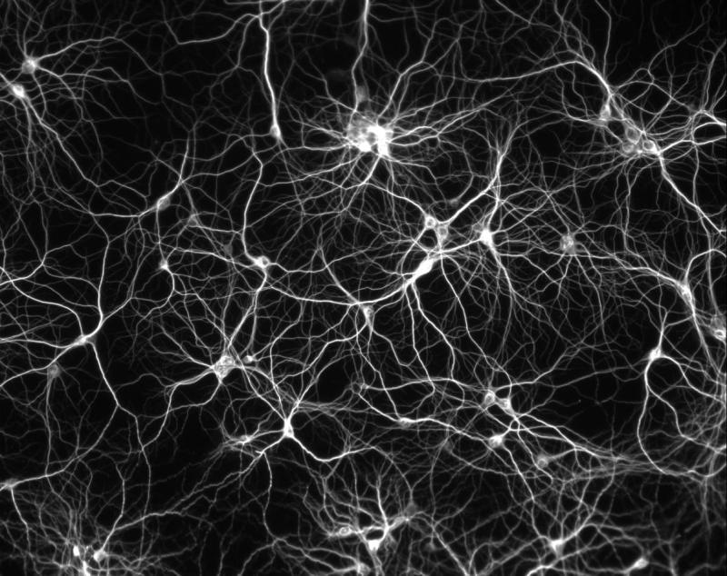 memorymamboneurons